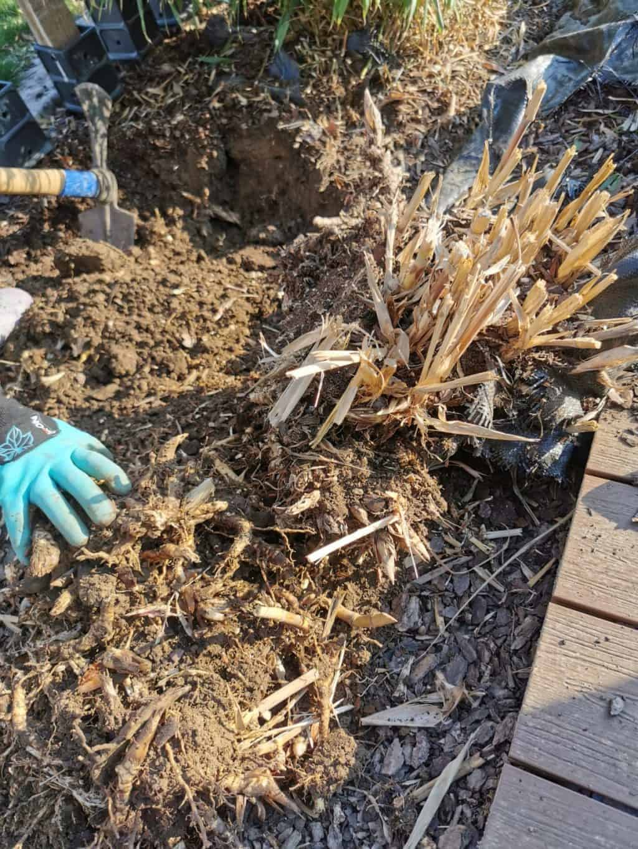 7. Tag Gartenarbeit Corona Tagebuch Bild 3