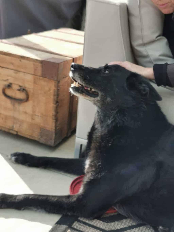 1. Tag Hundetag Corona Tagebuch